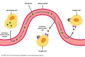 hormone-action
