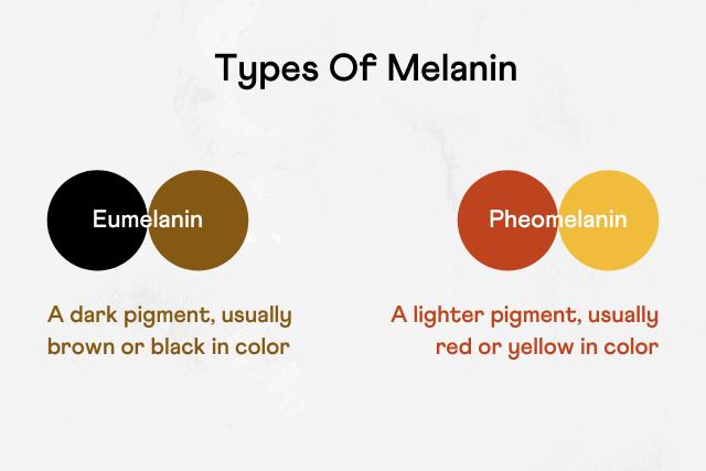 Types of melanin