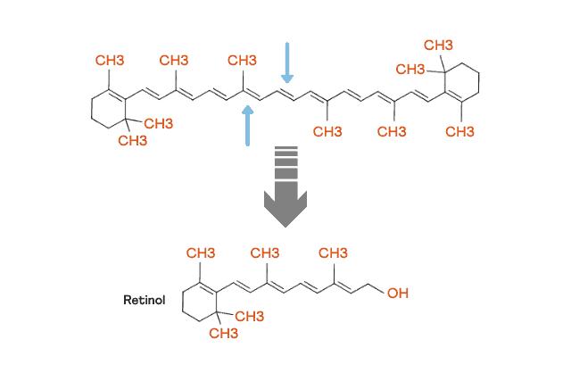 Beta carotene conversion to vitamin A