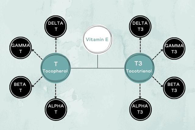 Different forms of vitamin E